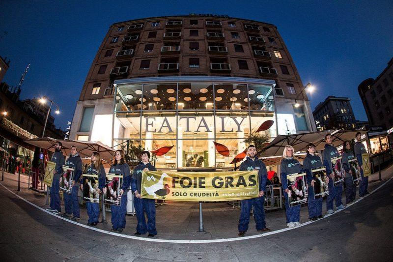flashmob, esseri animali, eataly