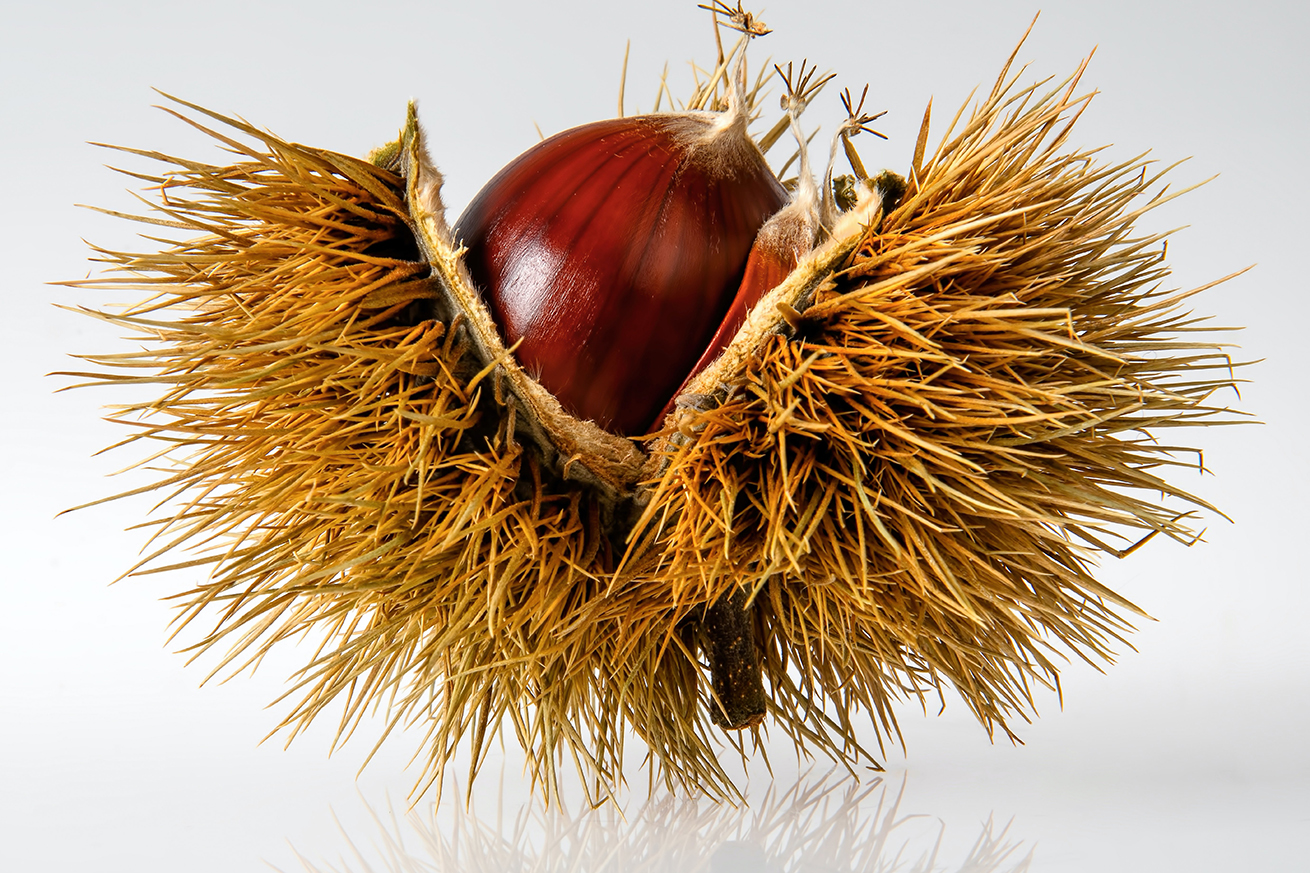 castagne e marroni differenze
