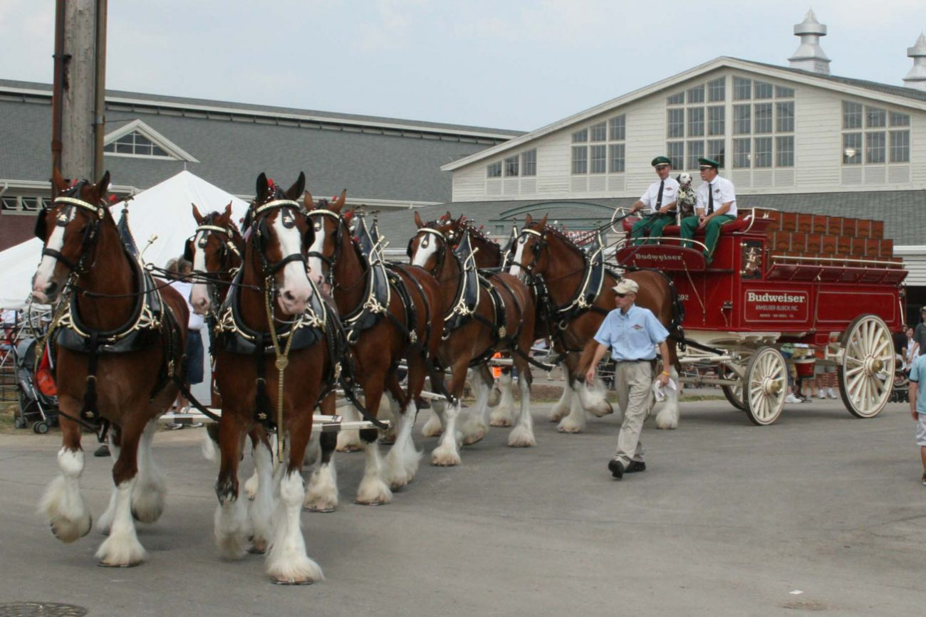 Budweiser Clydesdales autore Freekee wikipedia
